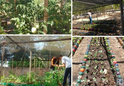 Horta escolar agroecologica