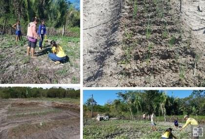 Horticultura sustentável